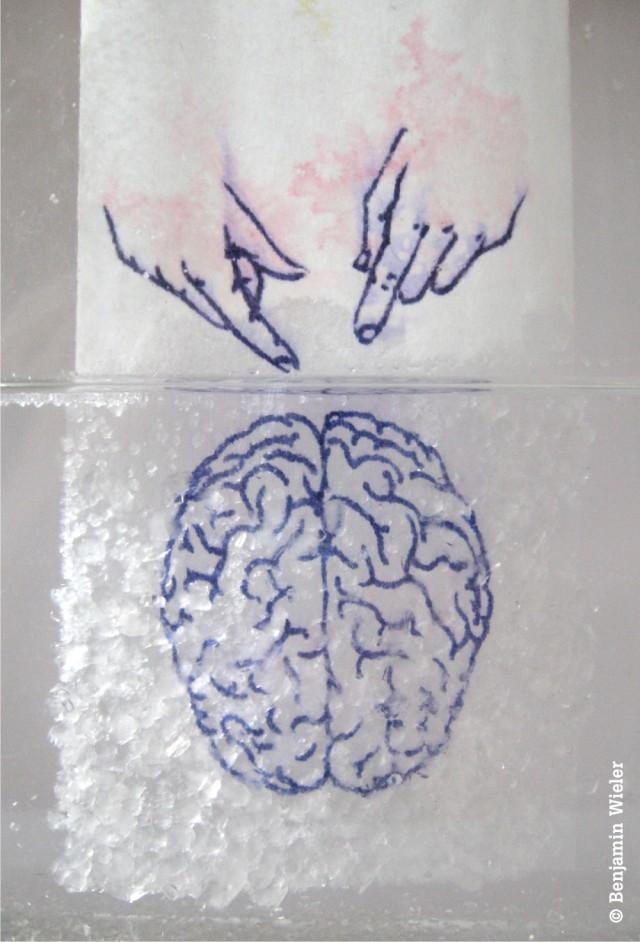 BWieler brain functions x